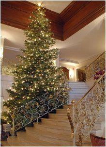 Christmas Tree by Stairway