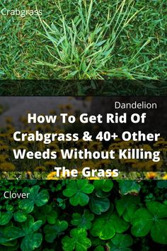 Garden Yard Ideas, Lawn And Garden, Garden Projects, Killing Weeds In Lawn, Kill Weeds Naturally, Garden Weeds, Lawn Weeds, Weed Killer Homemade, Lawn Mower Repair