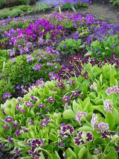 NIB – RINGVE MUSEUM og Botaniske hager | Artemisias verden