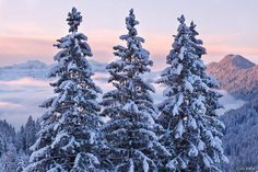 ★ Princessly Pink ★ Snowy trees  Visit our Page -► Amazing Facts and Nature ◄- For more.  https://www.facebook.com/AmazingFactsandNature1/posts/1014532845229741