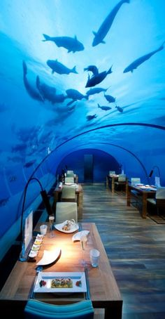 Ithaa Undersea Restaurant, Conrad Maldives Rangali Island(Cool Places In The World)