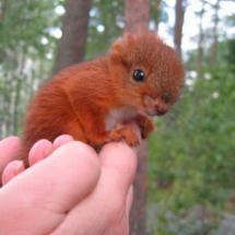 Baby squirrel  so cute