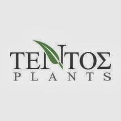 Τέντος Plants Plants, Flora, Plant, Planting