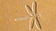 Dragonfly fossil, about 150 million years old, in Solnhofen, Bavaria, Germany (© Ingo Arndt/Minden Pictures) Bing Backgrounds, Daily Pictures, What Is Life About, Old Things, In This Moment, Bavaria Germany, Dragonflies, Fossils, Amazing