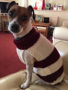 Made to order Dog Jumper, Dog Sweater, hand knitted in UK, with or without harness hole and optional pocket Knitting Patterns Free Dog, Hand Knitting, Chihuahua, Waterproof Dog Coats, Dog Jumpers, The Wooly, Jack Russells, How To Start Knitting, Whippets