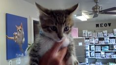 The day I brought Chooie home. Adopted from Middletown Animal Hospital.