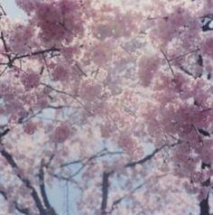 Rinko Kawauchi 'Illuminance' series