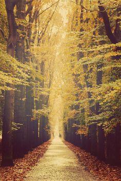 Laurë (by Mathijs Delva) Bientôt l'automne :)