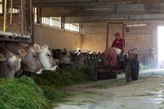 La nostra fattoria