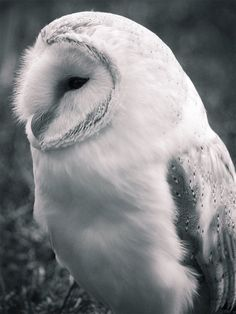 By: Fiffill    http://naldzgraphics.net/photography/owl-pictures/