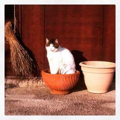 Lolly (cat in bloom) ) #cat