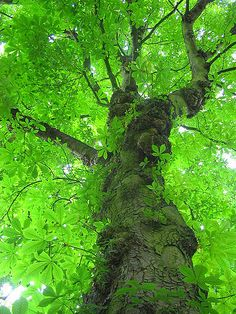 New Ideas For Tree Nature Green Beautiful Beautiful World, Beautiful Places, Trees Beautiful, Foto Nature, Old Trees, Nature Tree, Tree Forest, Tree Art, Tree Of Life
