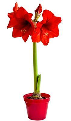 Food Design, Bud, Flora, Lily, Homemade, Painting, Gardening, Inspiration, Garden