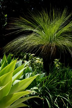 love the australian grass tree for a feature in the garden