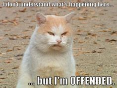 Oh people who are offended by EVERYTHING! Get your head out of the sand and get some thick skin! People are going to say stuff and do stuff that you don't like. Things are going to happen that are not ideal. Calmly say, I don't like that and move on! Ever heard of don't sweat the small stuff?