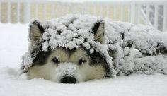Descubre cómo curar a un perro con resfriado