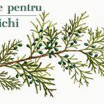 Ulei de Ricin și Gălbenuș de Ou Pentru Păr – Leacul lui Arsenie Boca   La Taifas Plants, Plant, Planets