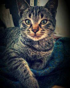 "fatima_jangurazova: ""#nature #природа#кот #кошка #cat #cats #котэ #красиво #красота #beautiful #nofilter#животные #любовь #love #кавказ #kavkaz #россия #russia #кавказскиегоры #северныйкавказ#pet #kitty #nakedplanet #animal#портрет #portrait#глаза"""