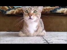 korku filmi izleyen kedi - YouTube Youtube, Animals, I Love, Cat Breeds, Animales, Animaux, Animal, Animais, Youtubers