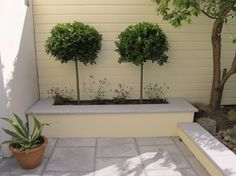 Bay trees in raised beds Small Courtyard Gardens, Small Gardens, Outdoor Gardens, Bay Leaf Tree, Bay Trees, Garden Trees, Trees To Plant, Bay Laurel Tree, French Cottage Garden