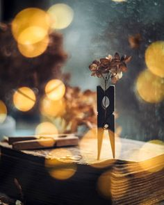 "🍂МариЯ🍂 pe Instagram: ""Хочется волшебства🌟😍 #nikonrussia Pentacon50/1.8 ••••• #bokeh_school_work #limpopo_school_work #the_gallery_of_magic #explore_dof…"" Bokeh Effect, Out Of Focus, Just Amazing, Incense, Beautiful"