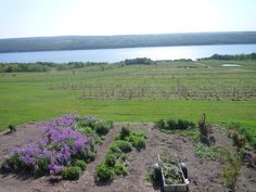 Finger Lakes New York - Wine Country