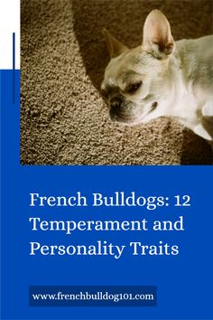 What is the personality of a French Bulldog? Considering such things as your experience with dogs, how much time you can invest in training your French dog, and what type of home you have makes you a responsible French dog owner (even before bringing one home!) What is certain is that dogs can enhance your emotional well-being, especially our loveable French Bulldog friends.  #frenchie #frenchbulldogpersonality #frenchbulldogtips #frenchbulldog French Bulldog Temperament, French Bulldog Personality, French Bulldog Facts, French Bulldog Puppies, French Bulldogs, French Dogs, Dog Owners, Training, Type