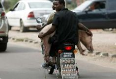 This little piggy went to market. with a couple of guys on a motorbike in Kinshasa, Democratic Republic of Congo Pigs Eating, Dead Dog, 29 September, Congo Kinshasa, This Little Piggy, Out Of Africa, Cool Photos, The Creator, Guys