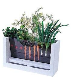 Para ver os vegetais crescerem!
