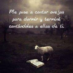 A contar ovejas!!!