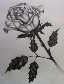 Another rose :)