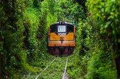 """อลังการ!! """"Unseen ร.ฟ.ท."""" เส้นทางรถไฟไทยปริศนา ที่งดงามดั่ง """"Tunnel of Love"""""""