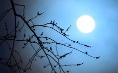 Contemplação da Lua