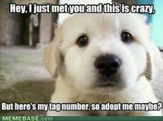 Adopt Me Maybe Funny Pictures
