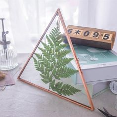 Gift Card Boxes, Copper Glass, Double Glass, Box Houses, Rose Gold Pink, Garden Gifts, Dry Plants, Floating Frame, Cool Walls
