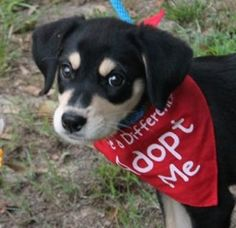 Laynie was adopted one day after arriving!