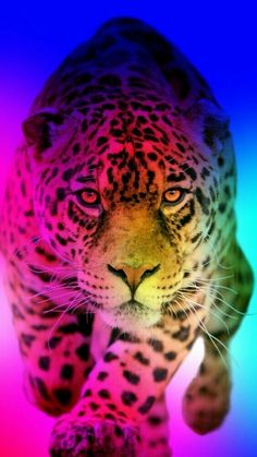 Cute Kawaii Animals, Cute Funny Animals, Cute Baby Animals, Cute Dogs, Wild Animals Photos, Cute Animal Photos, Animal Pictures, Big Cats Art, Cat Art