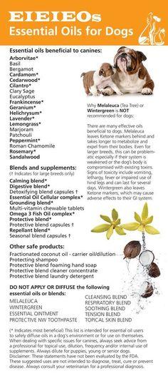 Essential Oils for Dogs: #EssentialOils #Pets Pinned for you by https://organicaromas.com/