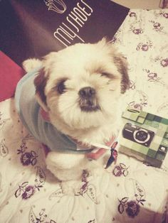 OMG, This looks like my puppy, Lucy!! Sooo cute!