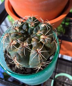 House Plants: How to Heal Common Cactus & Succulent Ailments House Plants Decor, Plant Decor, Water Me, Houseplants, Container Gardening, Greenery, Cactus, Succulents, Treats