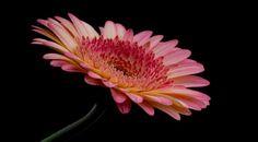Side view. by kees ijzerman: Fine Art Photography #photography #amazingpics http://alldayphotography.com
