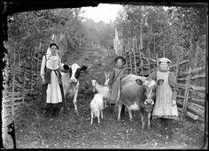 Förr i tiden var det självklart att barnen skulle hjälpa till på gården. Redan som små följde barnen med föräldrarna i arbetet. De första egna arbetsuppgifterna som barnen fick kunde vara att gå ärenden eller att valla djur. Dalarna, Lima socken, 1906. Fotograf: Per Persson