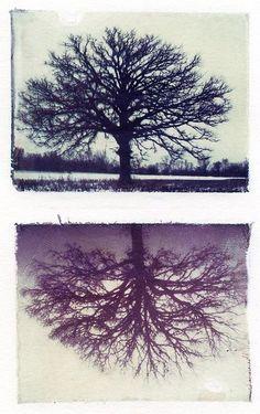 Polaroid Transfer tree #polaroid transfer