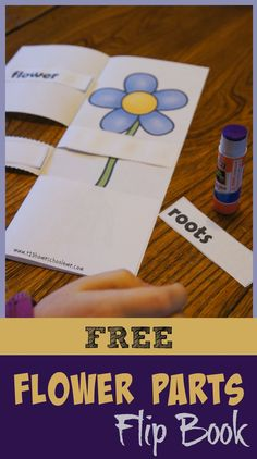 Flower Parts Flip book is a free science printable for kids from Preschool, Kindergarten, to 1st and 2nd grade. (homeschool, science)