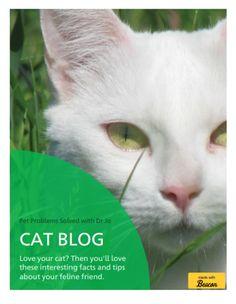 Cat Blog Ebook Cover