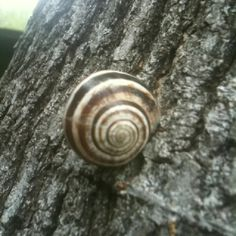 Laurie Pervino's Snail