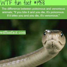 The difference between poisnous and venomous - WTF fun facts