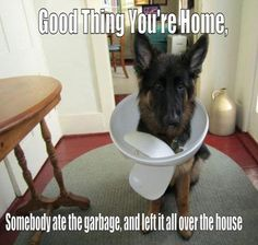 My dog moose would do this! And the kids would use this line to defend him!