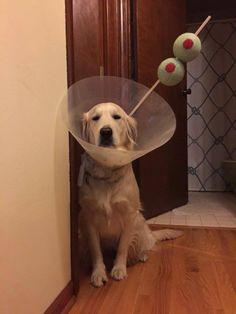 Diy Dog Cone Luxury Hilarious Cone Of Shame Dog Halloween Costume Of 18 Beautiful Diy Dog Cone - 18 Beautiful Diy Dog Cone Love My Dog, Funny Shit, Funny Cute, Funny Stuff, Hilarious Memes, Funny Animal Pictures, Funny Animals, Cute Animals, Funny Dogs