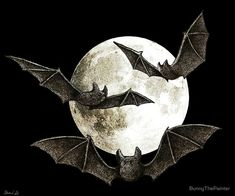 Bat Flying, Night Illustration, Halloween Drawings, Creatures Of The Night, Canvas Prints, Art Prints, Monochrome Photography, Still Life Photography, Buy Frames